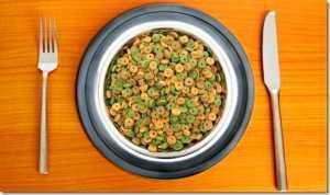 кошачий корм в тарелке