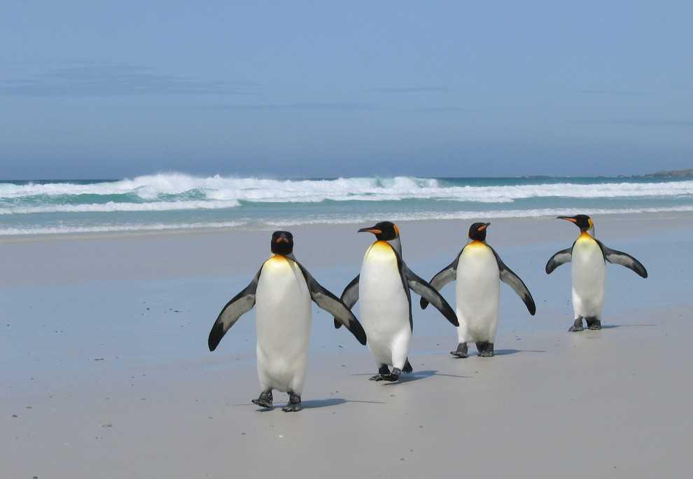 перевернутый пингвин